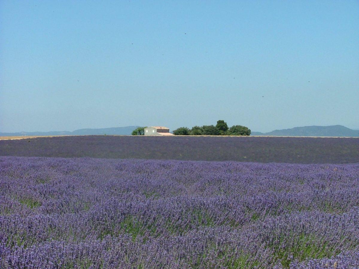 Premium Camping in der Provence: Camping La Farigoulette