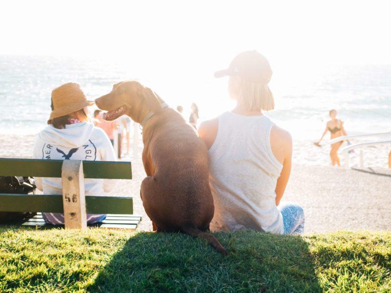 Premium Camping Haustier-ABC: Camping mit Hund, Katze & Maus
