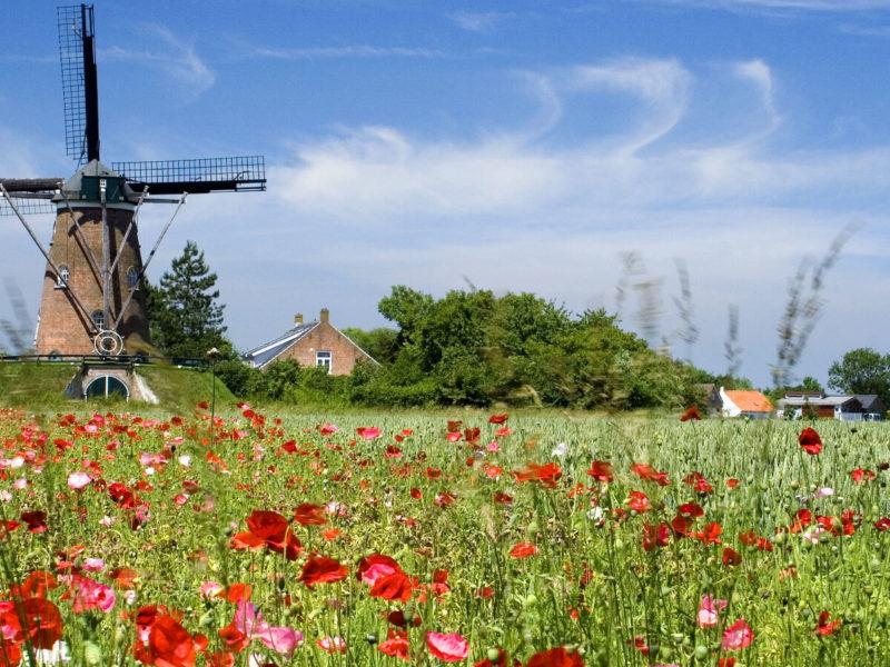 Premium Camping in Holland: Idyllische Natur und moderne Kultur